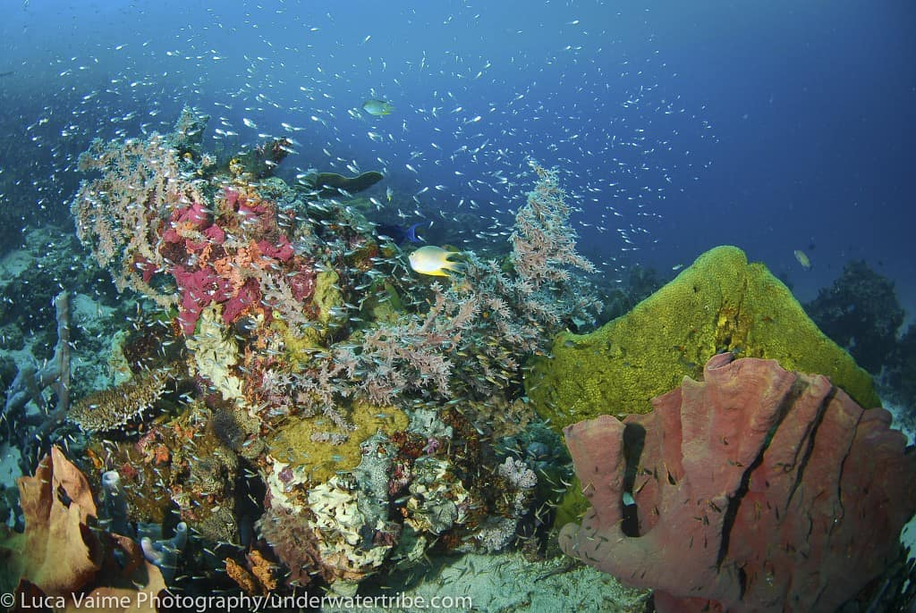 Indonesia Diving Holidays