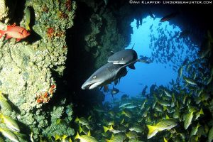 Cocos Island Liveaboard holiday Whitetip In Cave