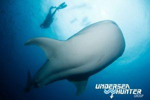 Cocos Liveaboard diving holiday Sea Hunter Avi Klapfer