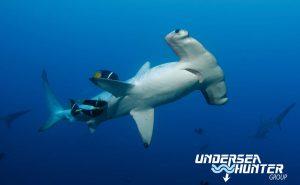 Cocos Liveaboard diving holiday Sea Hunter Avi Klapfer Hammerhead