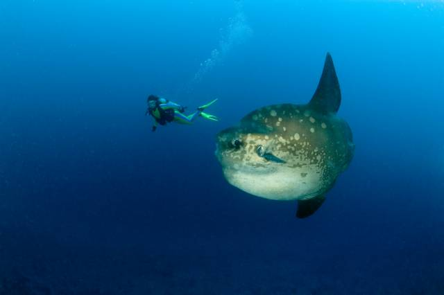 Indonesia Bali Diving holidays Sunfish and Diver