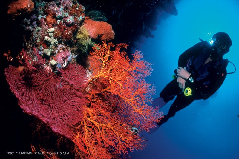Indonesia Bali Diving holidays reef and diver
