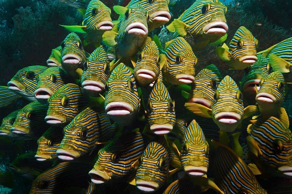 Indonesia Diving Holiday Diving In Raja Ampat school of fish