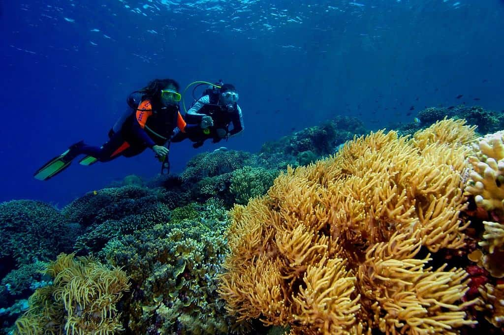Indonesia Diving Holiday North Sulawesi Bunaken By Rod Klein