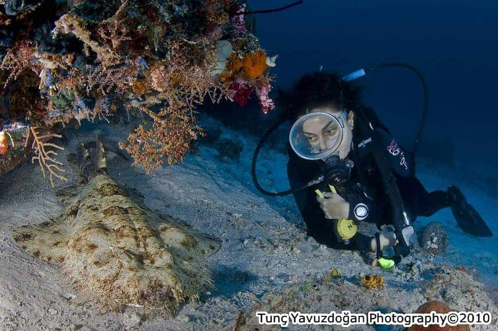 Indonesia Diving Holiday diver and ray