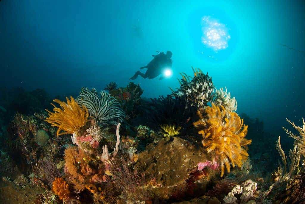 Indonesia liveaboard Diving holidays diver and reef