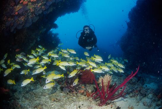 Maldives Diving Holiday Vilamendhoo Island Resort Diver and fish