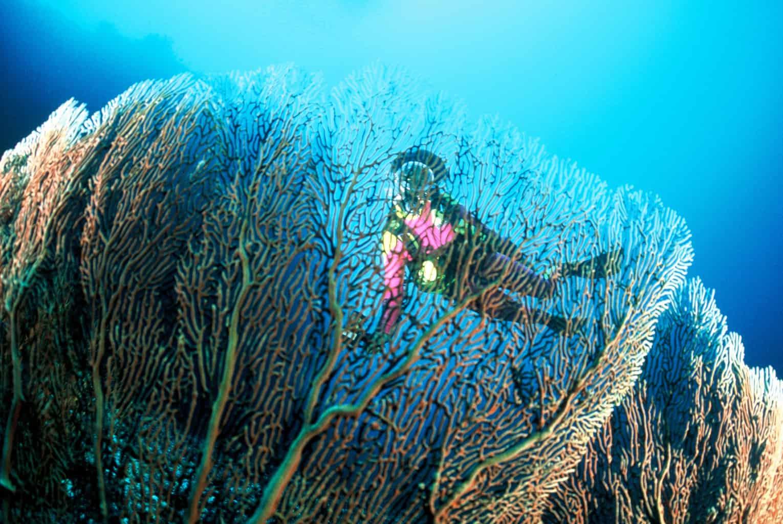 Maldives Liveaboard Holidays Carpe Diem Diver and Coral