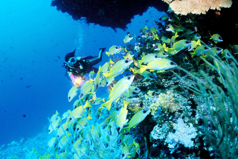 Maldives Liveaboard Holidays Carpe Diem Diver and fish