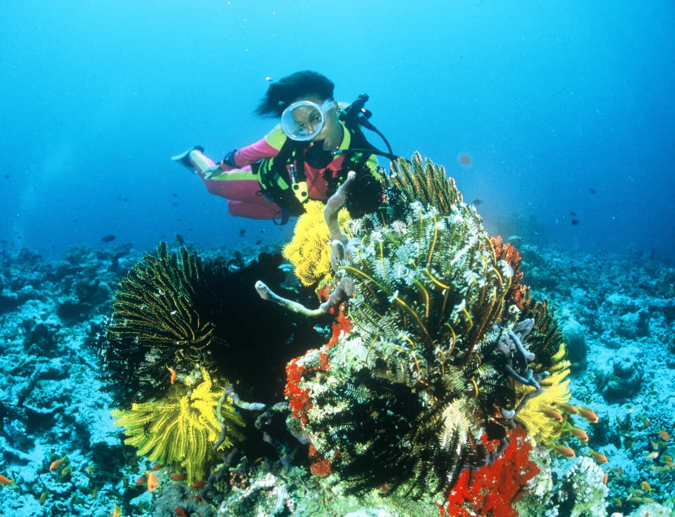 Maldives Liveaboard Holidays Emperor Atoll Diver and Coral