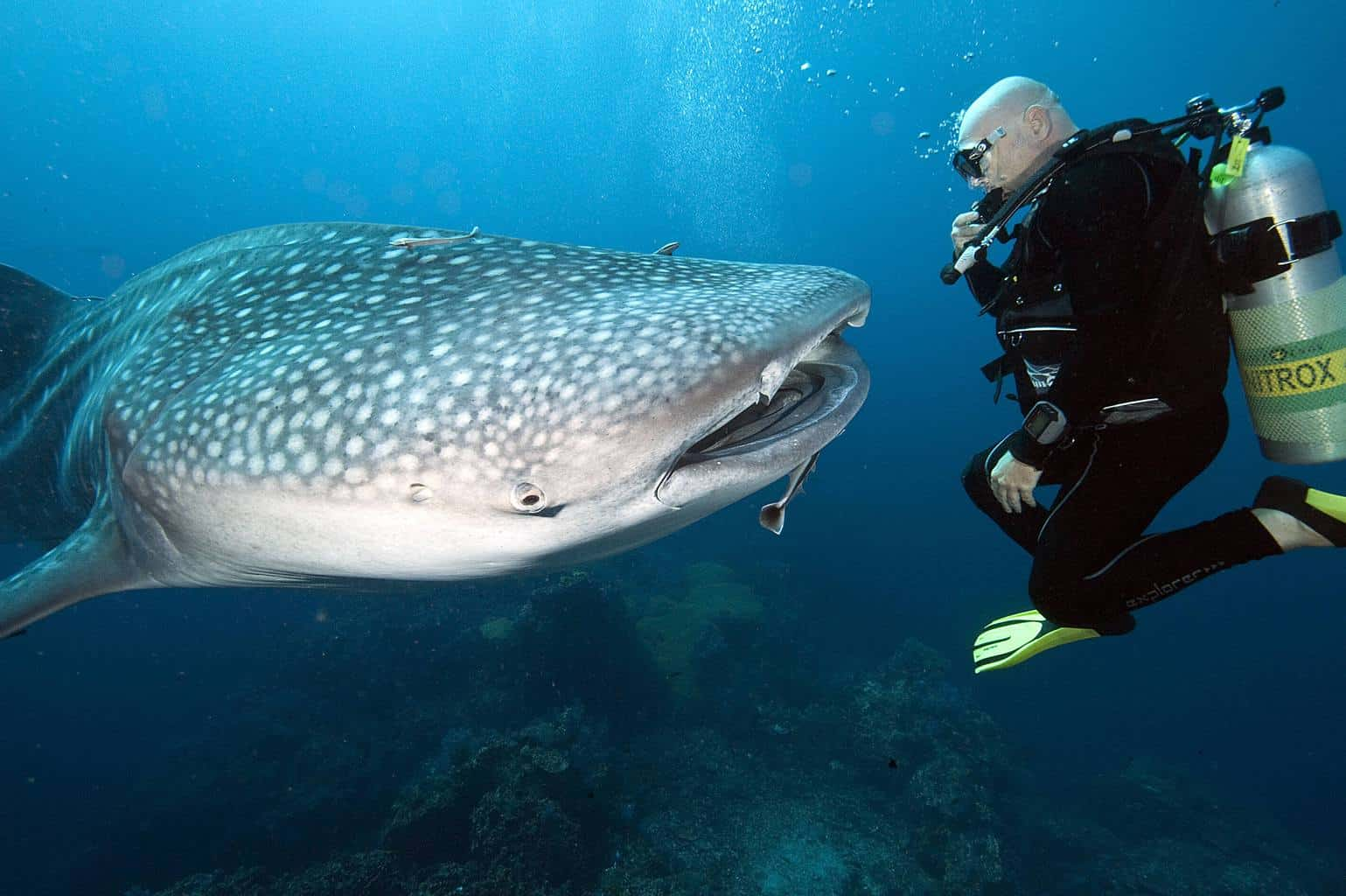 Maldives Liveaboard Holidays Emperor Leo Twin Diver and Whale Shark