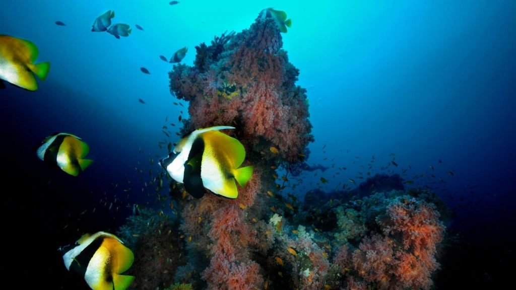 Maldives Liveaboard Holidays Emperor Voyager fish and coral
