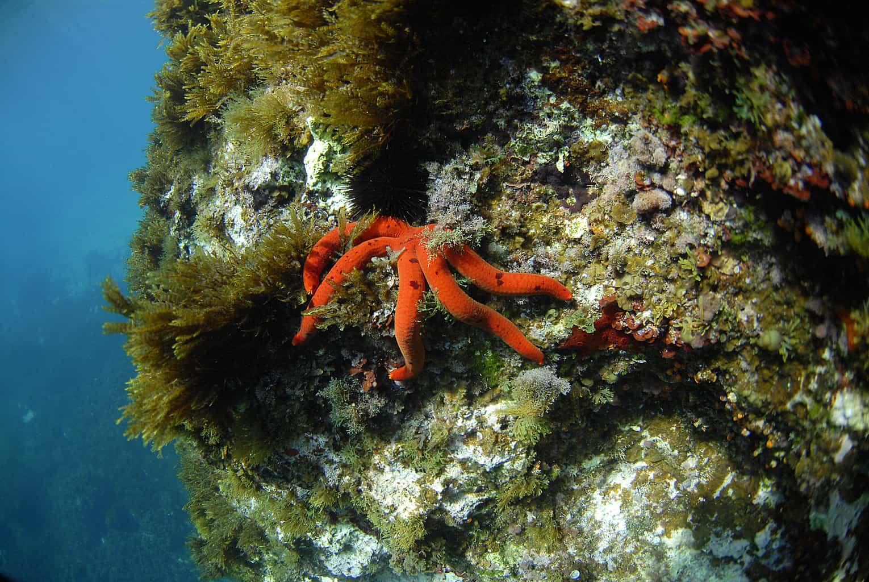 Malta and Gozo Diving holidays Starfish