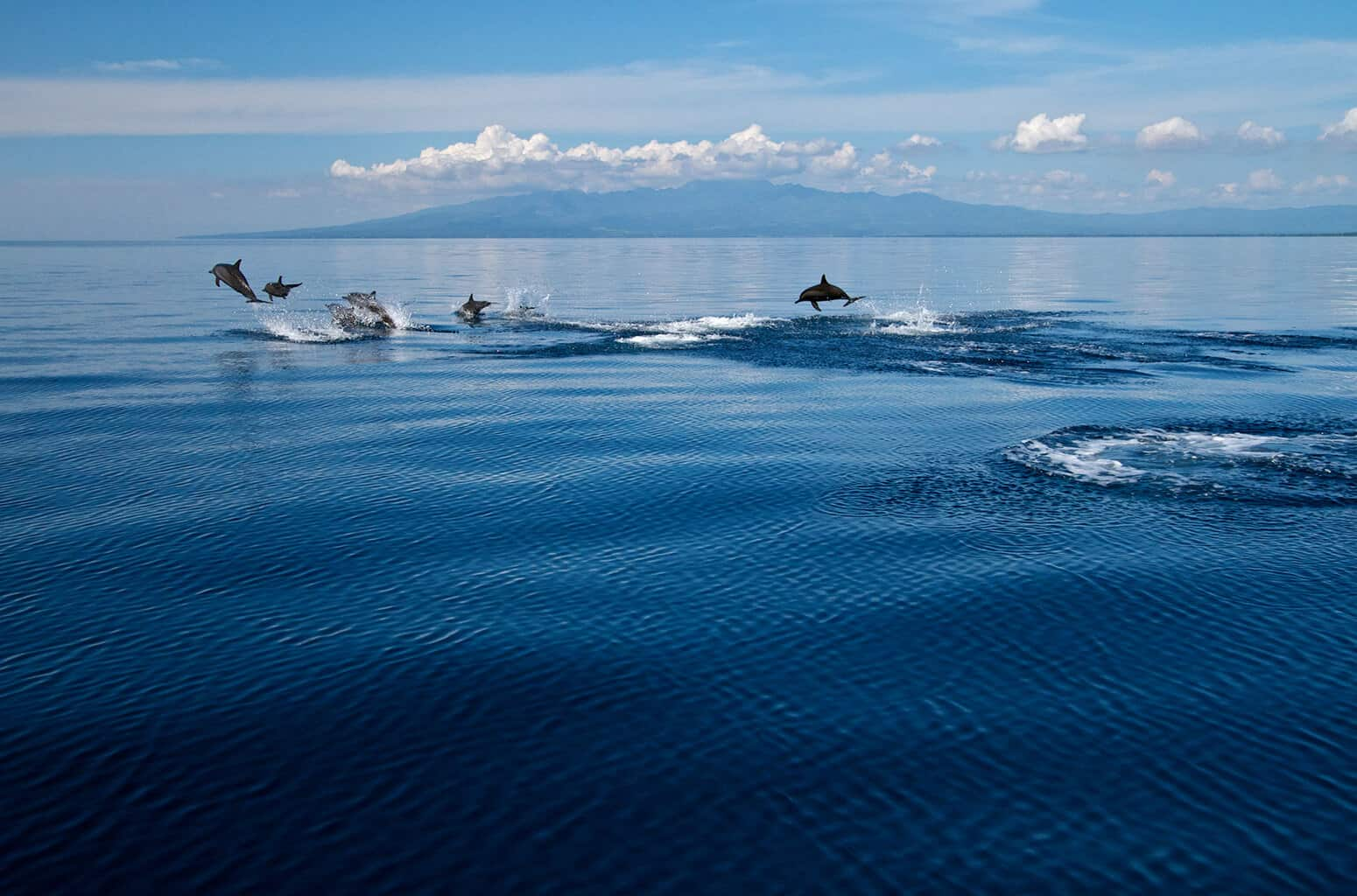 Philippines Diving holidays Atmosphere Resort Dolphins in the air