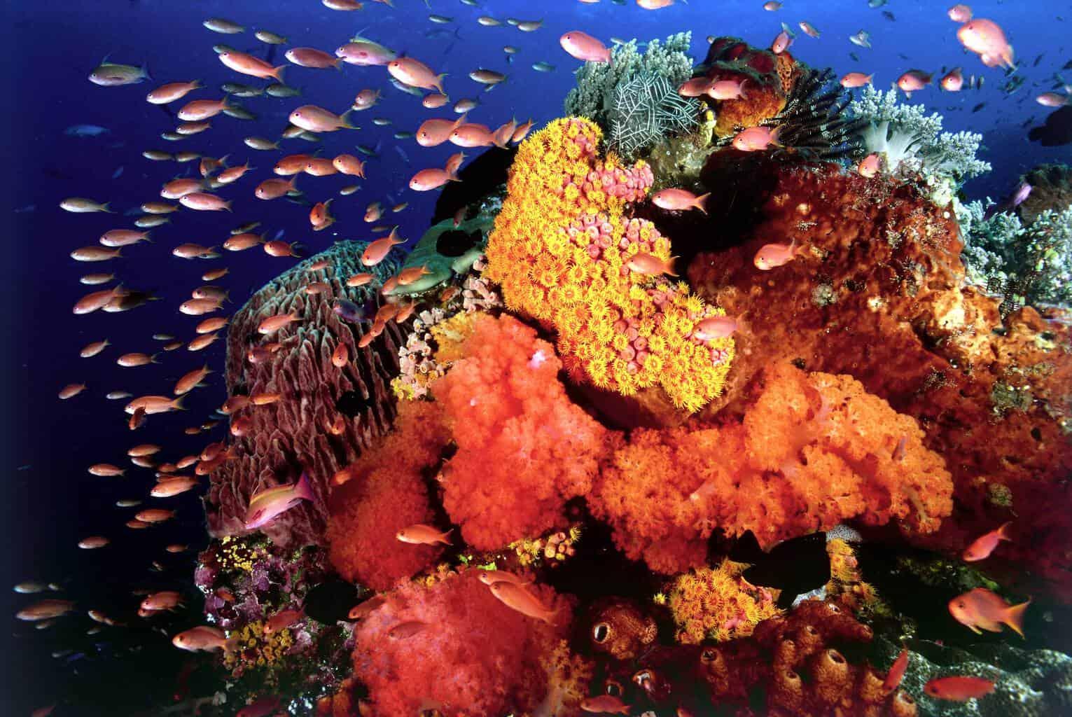 Red Sea Liveaboard holiday Emperor Superior Reef Scene