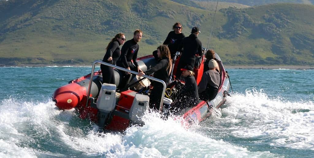 South Africa Diving Holidays Sardine Run Port St Johns Activities Ocean Excursion