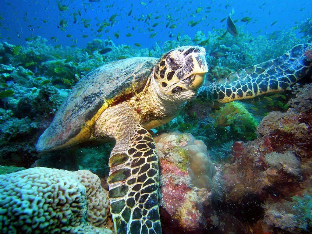 Sudan Diving Liveaboard holiday Sanganeb Tortoise Shab Rumi Arnaud