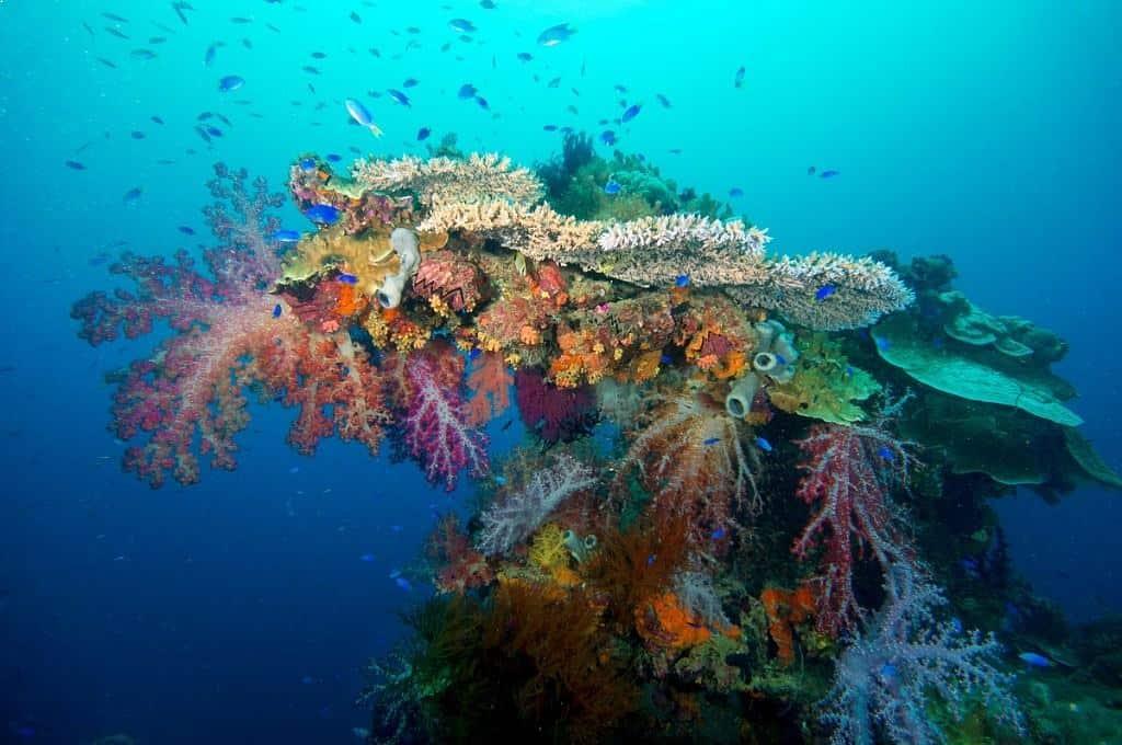Truk Diving Liveaboard Holiday Shinkoku Maru Soft Coral