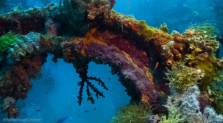 Truk Wreck Diving liveaboard holiday SS Thorfinn Arch wreck coral