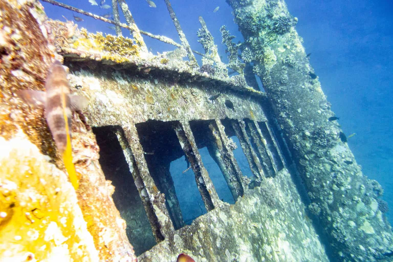 Red Sea Diving Blog