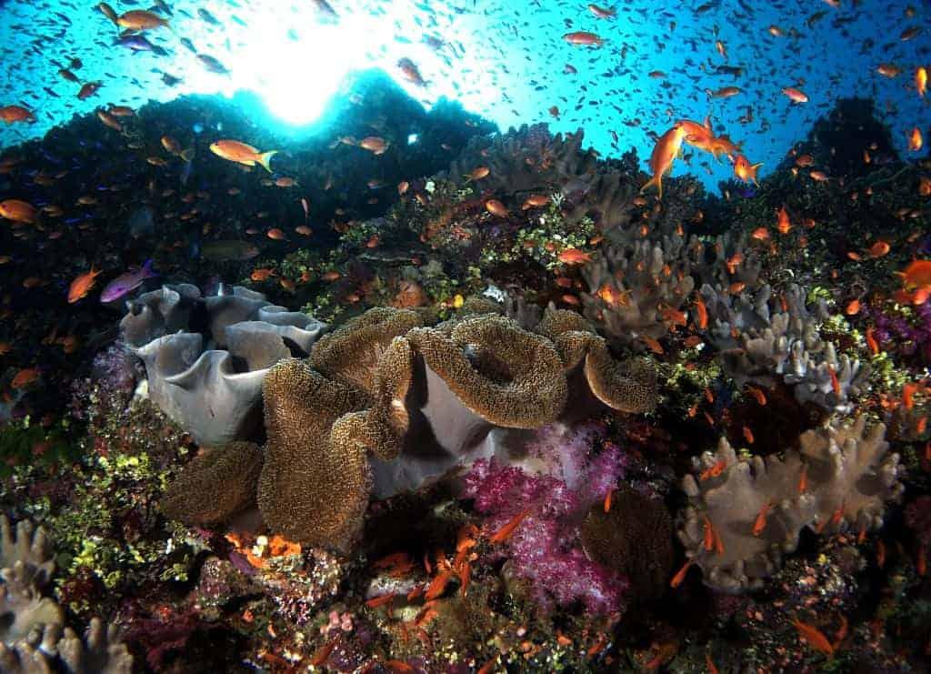 Fiji Diving Holiday shoal of fish and coral