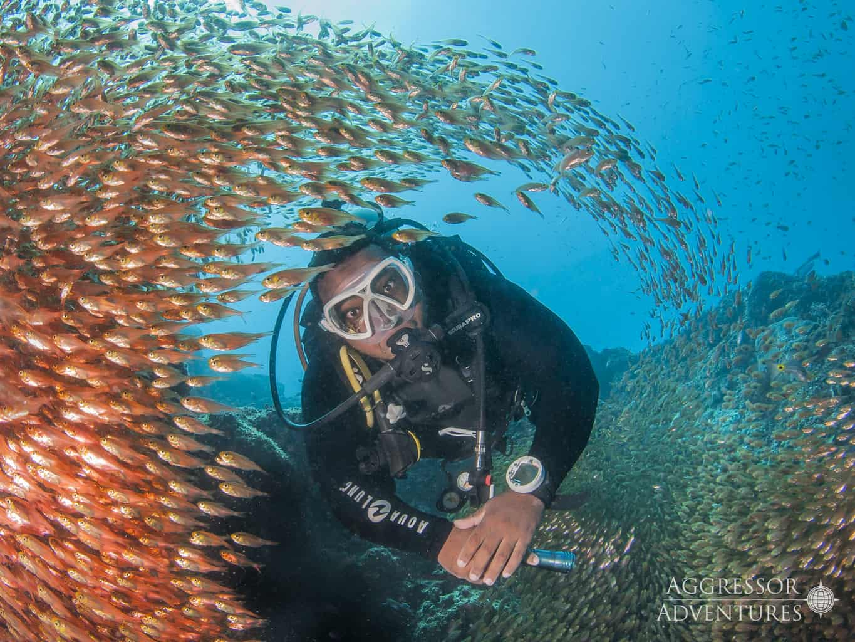 Oman Liveaboard Diving Holiday Oman Aggressor Diver and fish