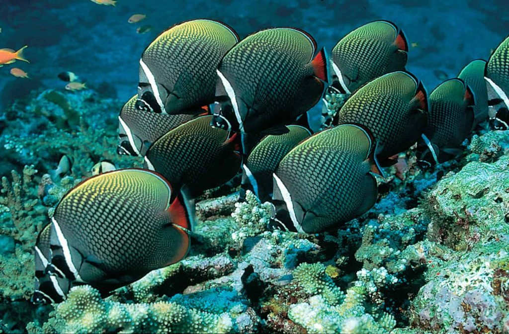 Thailand Diving Holidays credit Thailand Tourist office