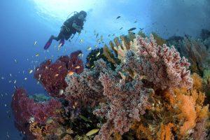 Indonesia liveaboard Diving holidays Pindito Raja Ampat coral