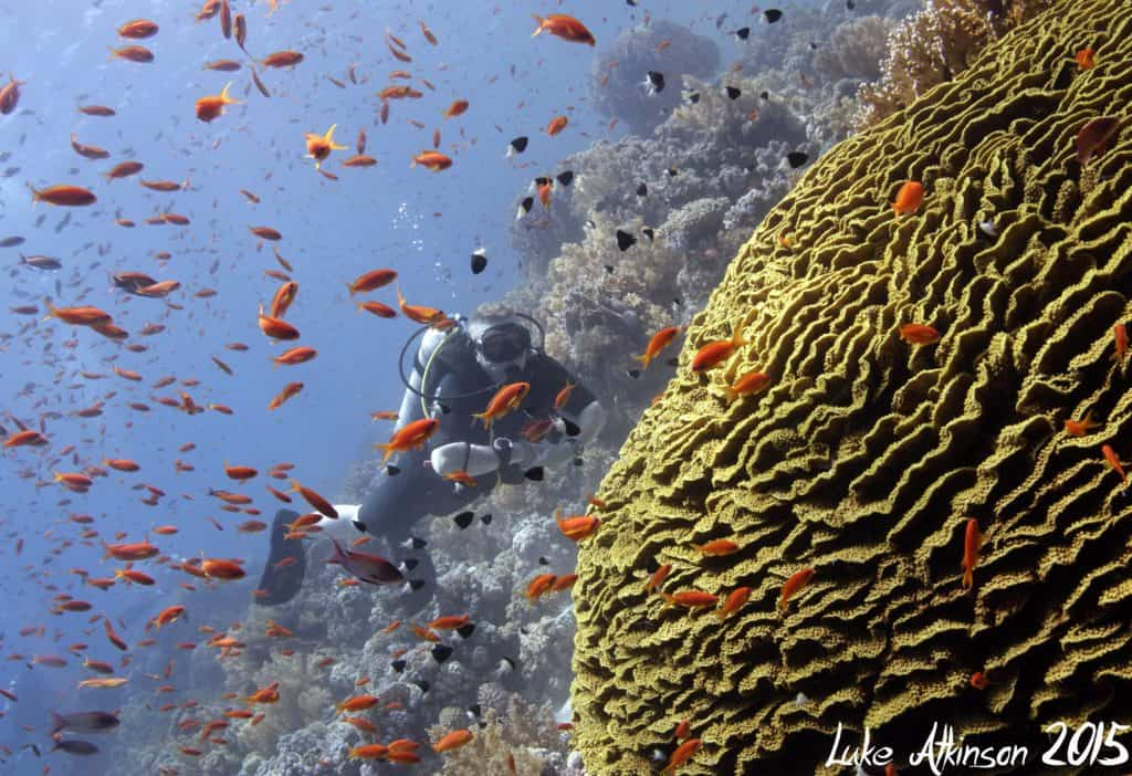 Red Sea Egypt Sharm