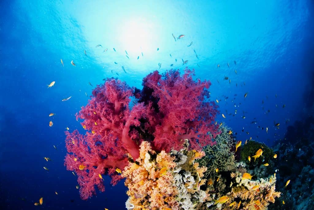 Sharm Diving