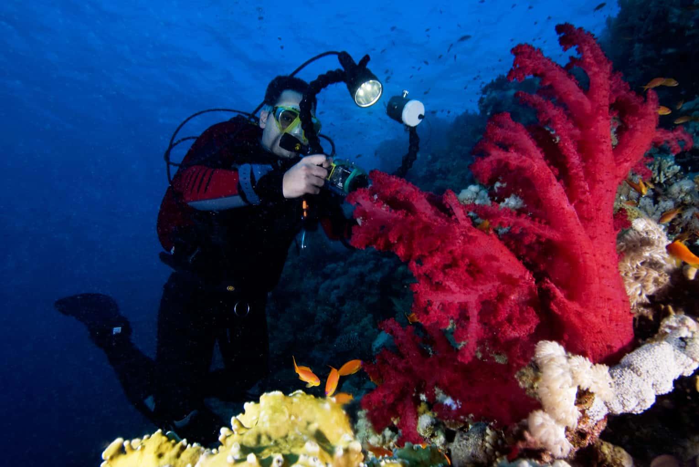 Red Sea Liveaboard Diver