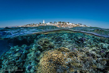 Red Sea Diving Holidays Duxy
