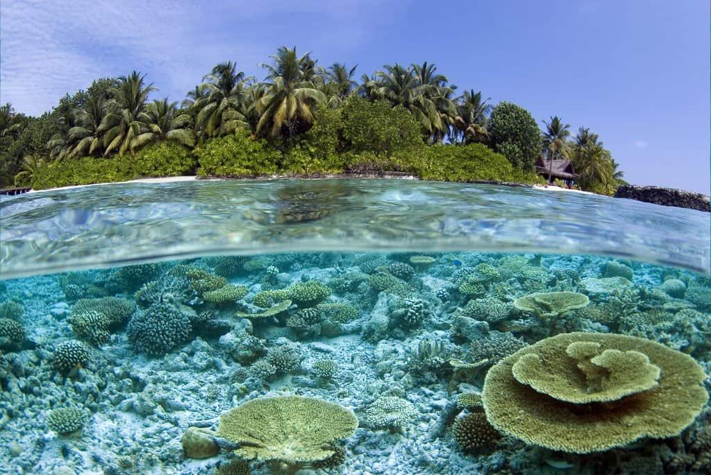 Photoshot Reef