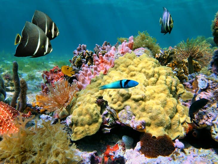 Dominica Diving Holidays Champagne Reef