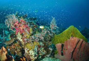 Indonesia Diving holidays - fantasic corals